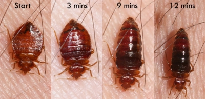 Bed Bug Extermination in Milwaukee
