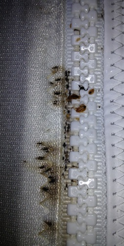 Milwaukee Bed Bug Pest Control