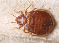 Milwaukee Bed Bug Removal