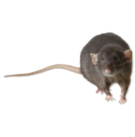 Milwaukee Pest Identification Guide Identify And Prevent