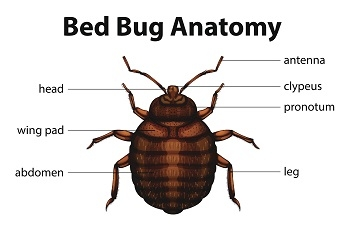 Milwaukee Bed Bug Extermination